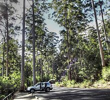 Pemberton Forest by Eve Parry