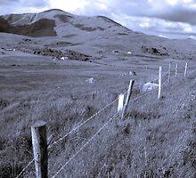 beautiful lush fields of ireland by morrbyte