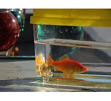 Prize Fish Photographic Print