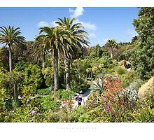 Tresco Gardens by Andrew Roland
