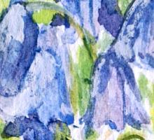 BLUEBELL TEE SHIRT/BABY GROW/STICKER Sticker