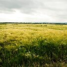 The barley field by steppeland