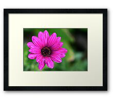 Perfectly Pink Framed Print