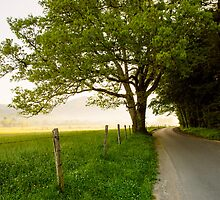 Around the Bend, Cades Cove, Smoky Mountains National Park by Mike Koenig