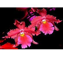 Deep Red orchids Photographic Print