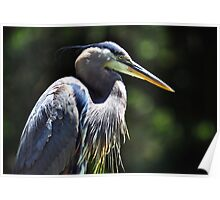 The Graceful Great Blue Heron Poster