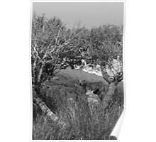 sheep framed in the arch of trees Poster