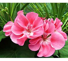 Tropical Pink Photographic Print