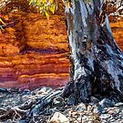 Gums by the Ochre Wall by Bette Devine