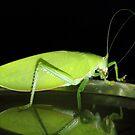 The Macro of a Grasshopper. by debjyotinayak