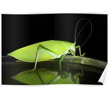 The Macro of a Grasshopper. Poster