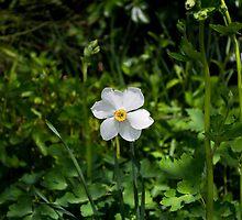 James Flower by lorenzoviolone
