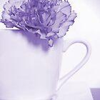 Carnation in Teacup, Purple by MelissaSue