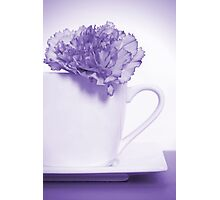 Carnation in Teacup, Purple Photographic Print