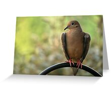 The Heart Of A Mourning Dove Greeting Card