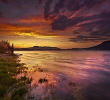 Electric Twilight by Thomas Dawson