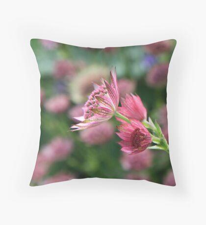 Astrantia Major Throw Pillow