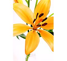 Bright Lily Photographic Print
