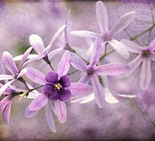 Textured Petrea by Beth Mason