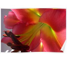 Sunlit Tree Lily Poster