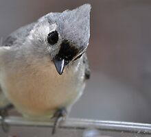 The Curious Titmouse by Gretchen Dunham