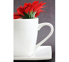 Gerbera in a Teacup Photographic Print