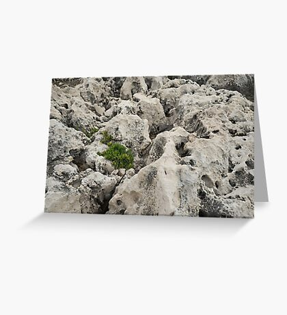 Life on Bare Rock - Weathered Limestone and Little Green Survivors Greeting Card