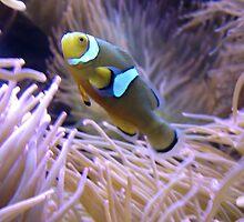 Clownfish iPhone/iPod Case by KimSha