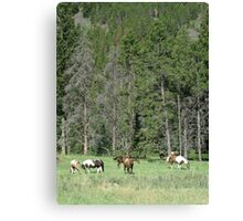 PACK STRING HORSES ON MAIN BOULDER CANYON ROAD Canvas Print
