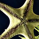 Starfish belly iPhone/iPod Case by KimSha