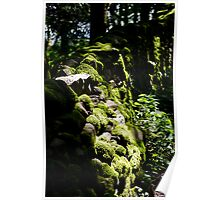 Sunlit mossy wall  Poster