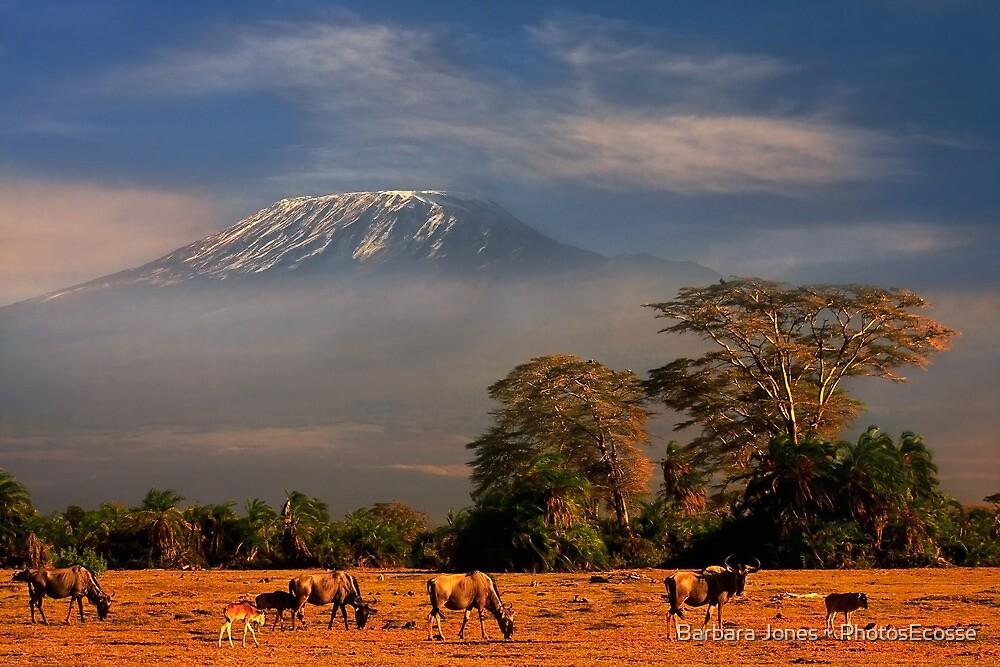 Kilimanjaro in early morning light, Amboseli National Park, Kenya, Africa. by PhotosEcosse