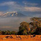 Kilimanjaro in early morning light, Amboseli National Park, Kenya, Africa. by photosecosse /barbara jones