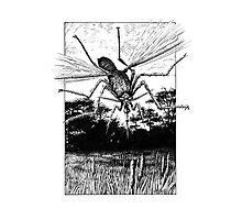 Giant Mosquito Photographic Print