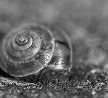 Snail shell by Catherine Breslin