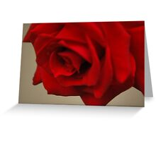 Rose petals Greeting Card