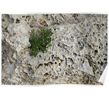 Life on Bare Rock - Pockmarked Limestone and Thyme  Poster