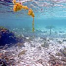 Fish Garden by globeboater