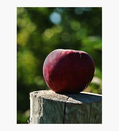 The Apple  Photographic Print