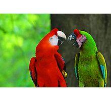 Birds #1 Photographic Print