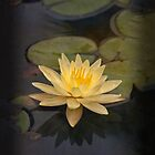 Zen lily for iPhone by Celeste Mookherjee