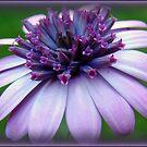 Purple Vintage by PatChristensen