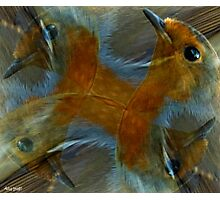 Designs Inspired By Nature: Wild Robin Photographic Print