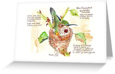 Phoebe, the Allen's Hummingbird - Botanical by Maree Clarkson