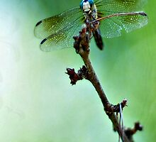 Dragonfly Dance  -iPhone case by Jeananne  Martin