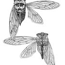 Cicada Study in Black and White by Justin Overholt