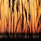 Cupsogue Reeds by Kirstyshots