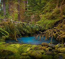 Rain Forest Pool by Mikhail Lenitsyn