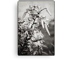 Tiger Lily - Mono Canvas Print