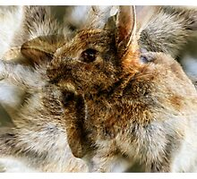 Designs Inspired By Nature: Wild Baby Rabbit Photographic Print